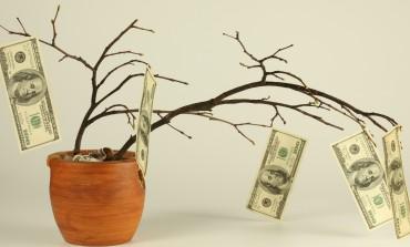 Capital semilla para empresas creativas: qué es y cómo obtenerlo