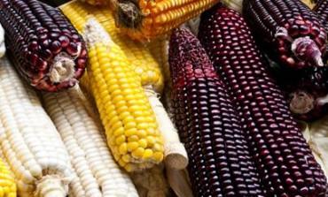 Rinden homenaje al maíz en el Festival del Centro Histórico