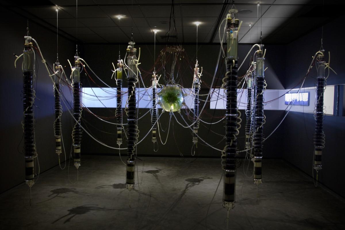 ¿Plantas robots? Naturaleza, ciencia y arte juntos en la obra de Gilberto Esparza